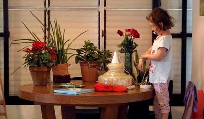 גלי גרינשפן, מיצב וידיאו, שטיח ופרחים, 2017.jpg