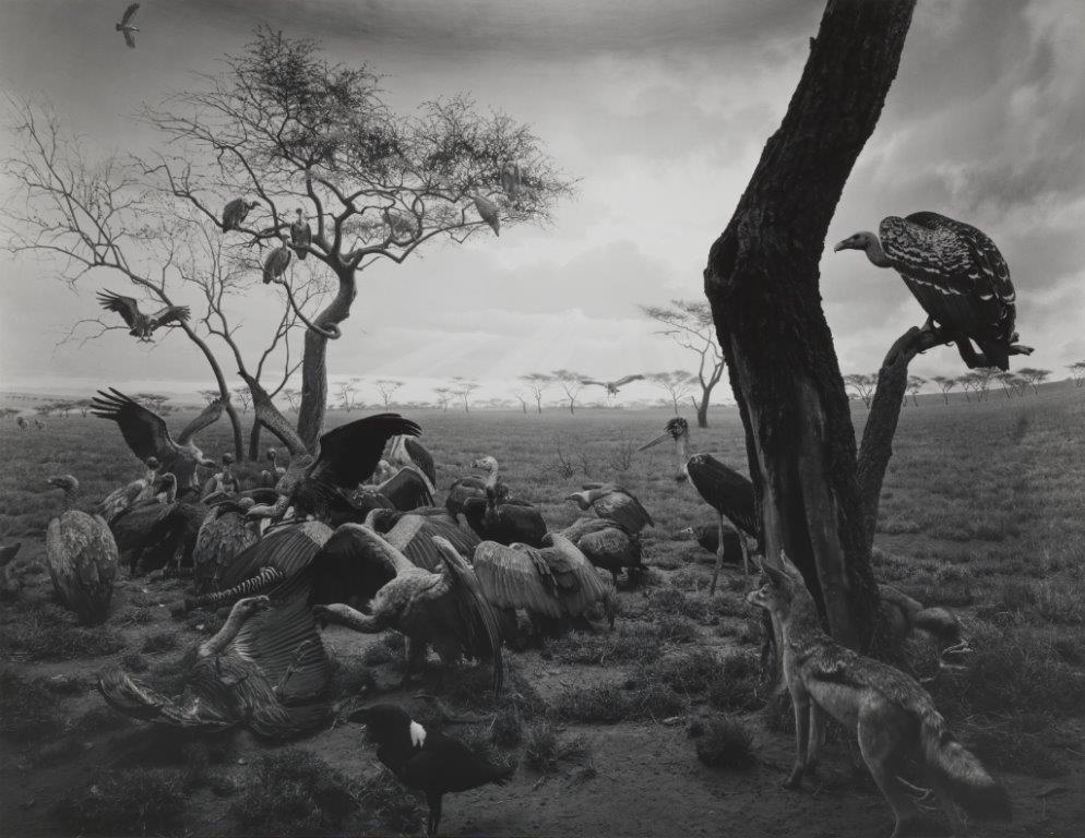 106_Hyena-Jackal_Vulture, 1976.jpg
